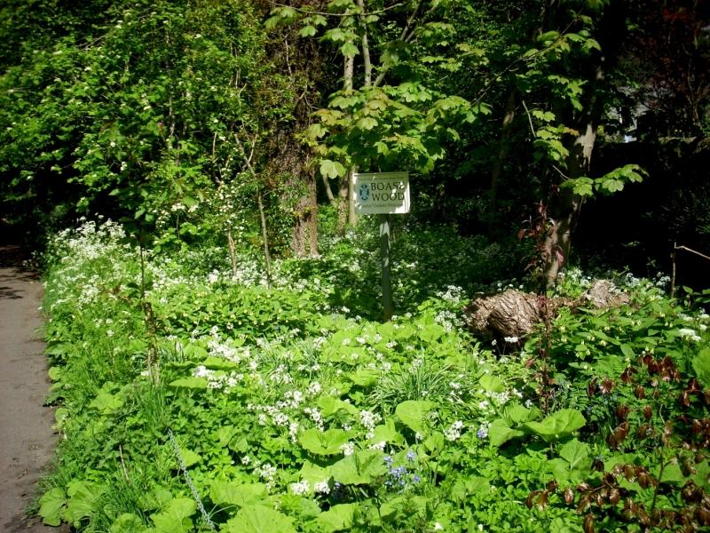 Boase Wood flowers