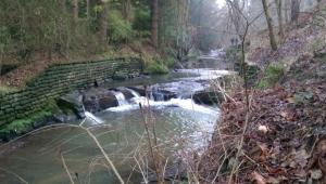 Botanic Gardens waterfalls