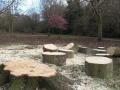 Tree felling operations