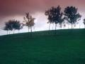 Hallow Hill 1982