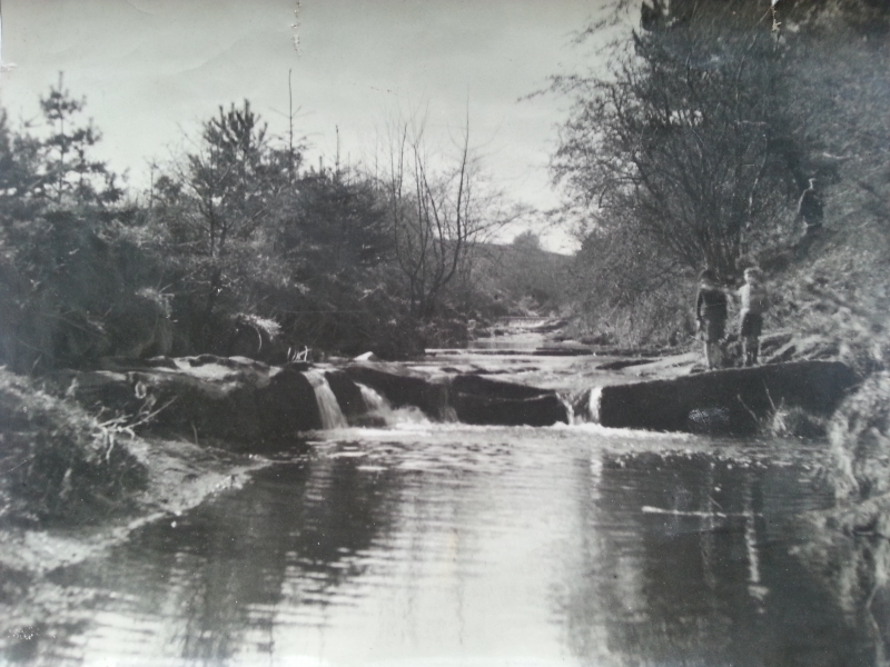 Waterfalls at the Botanic Gardens around 1960