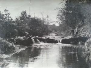 Waterfalls at the Botanic Gardens around 1960