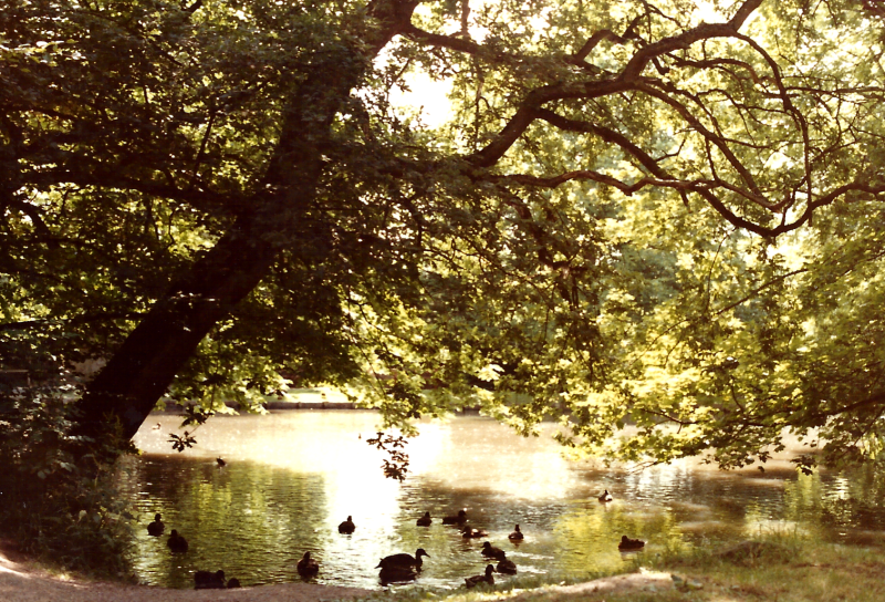 Law Mill pond