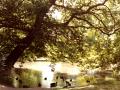 Law Mill pond